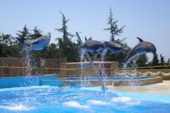 Дружные дельфины