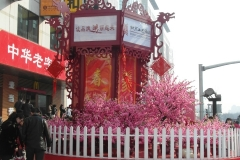 Февраль, а деревья цветут