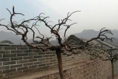 Вот такие деревья тут растут