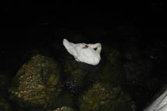 Лебеди в темноте прекрасны