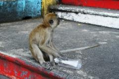 И еще обезьянки