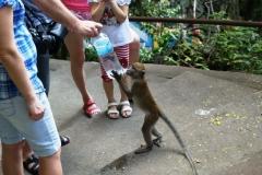 Туристы решили напоить обезьянку. Возможно, не добровольно решили