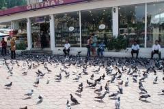 Много птиц на площади