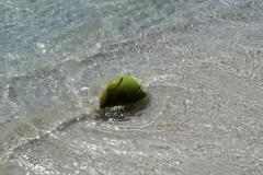 Осторожно, кокосы падают иногда