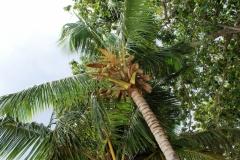 Вот с таких вот пальм