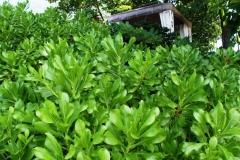 Шикарная растительность