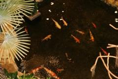 Рыбки в пруду... В аэропорту