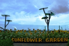 Сад подсолнухов - тоже в аэропорту