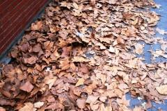 Как будто осень...