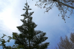 Приятные деревья