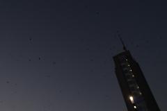 Очень много птиц летало над городом