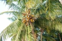 Под пальмой лежать иногда страшно