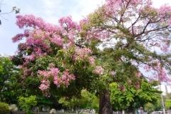 Весна в Нитерое