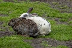 Чудесные кролики