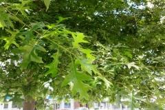 Сады и парки в А-Корунье