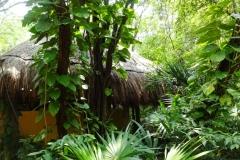 Мексика, Плайя-дель-Кармен, парк La Ceiba