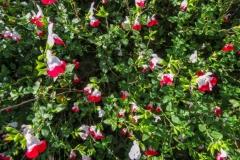 Местные цветы