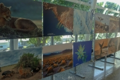 Выставка фото в аэропорту Буэнос-Айреса