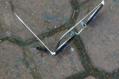 Гигантский муравей