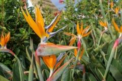 Цветущая Мадейра