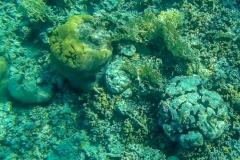 Южный пляж в Акабе, подводный мир