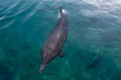 Дельфин в Красном море