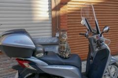Котик явно чувствует себя хозяином