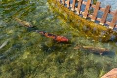 Рыбки в декоративном бассейне