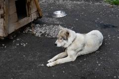 Чудесный пес