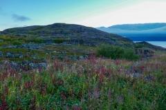 Природа севера