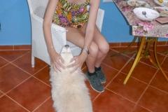 Чудесный пес!