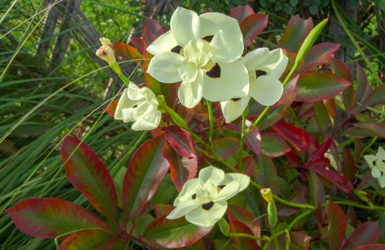 Цветы разные, в конце мая тут волшебно, запах потрясающий