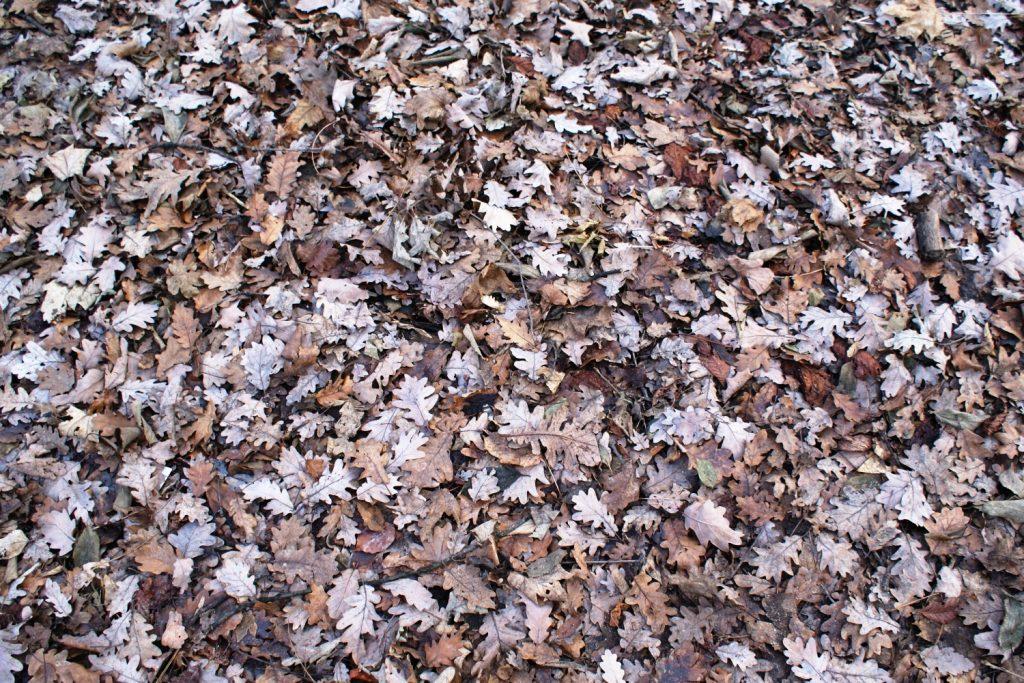 Как будто бы осень