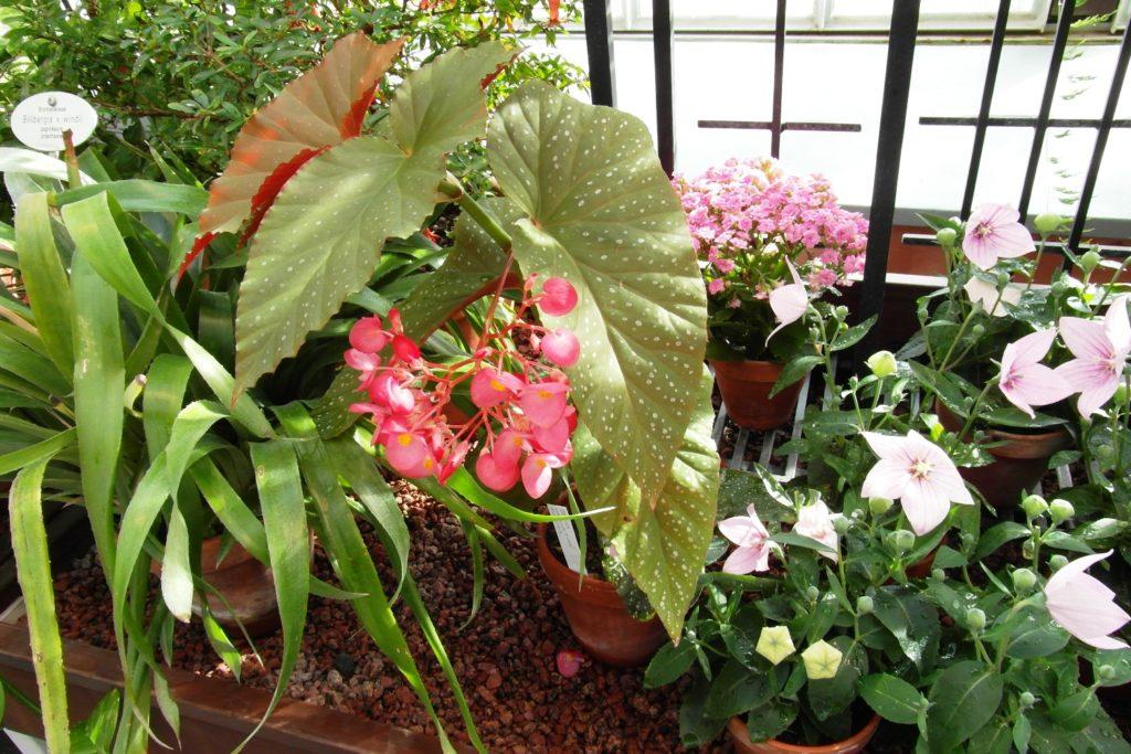 Ботанический сад. Как будто даже лето!