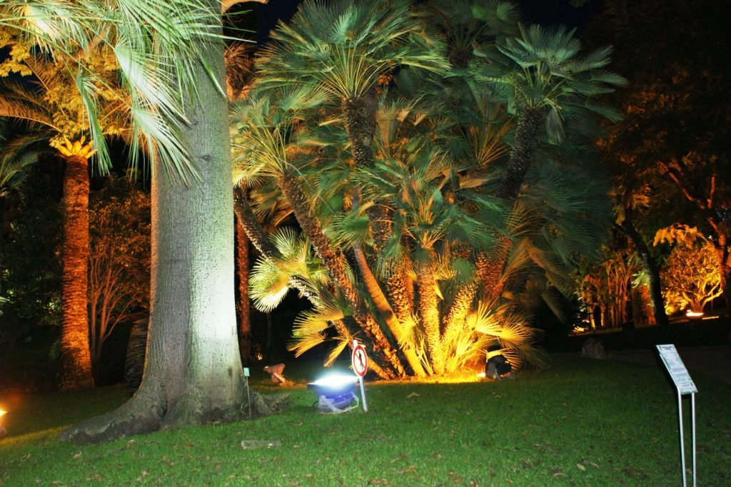 Новый год: дерево, подсветка...