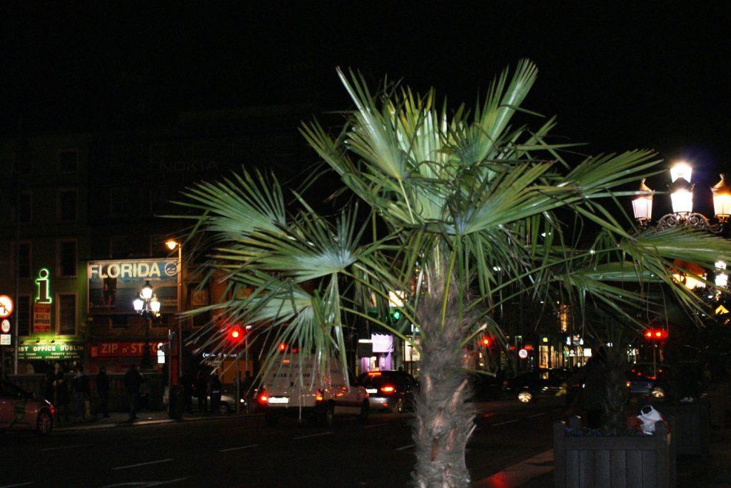 Вот уж что не ожидала тут увидеть - это пальмы