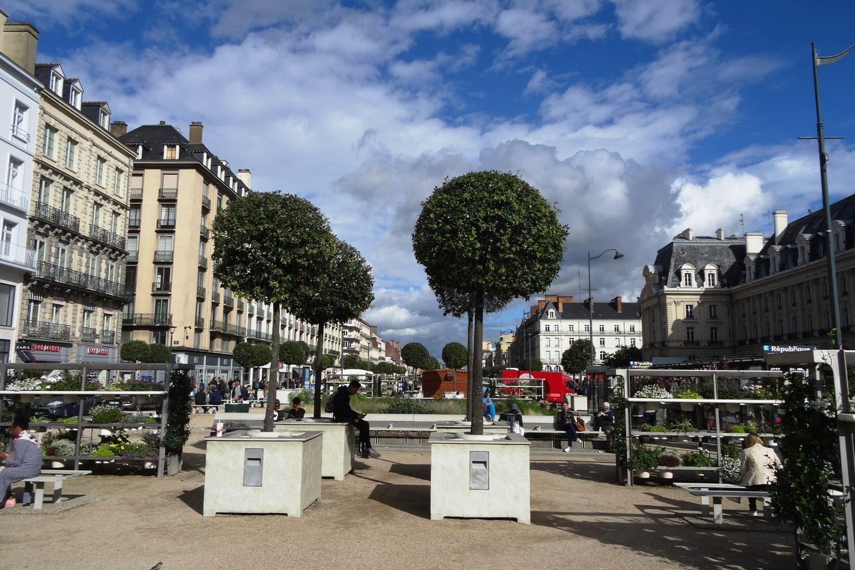 А также деревья в современном оформлении
