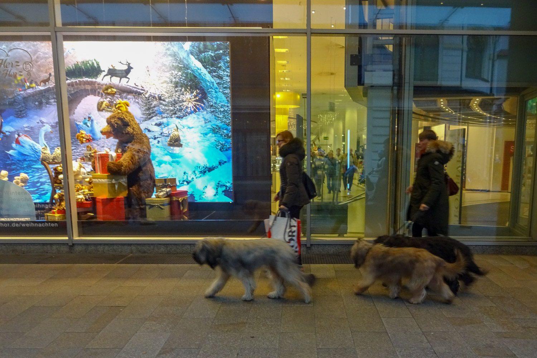 На улицах тоже много собак