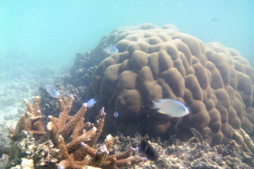 И еще кораллы