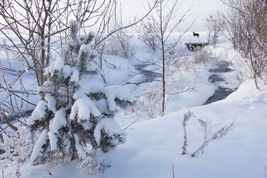 Лапки в снегу