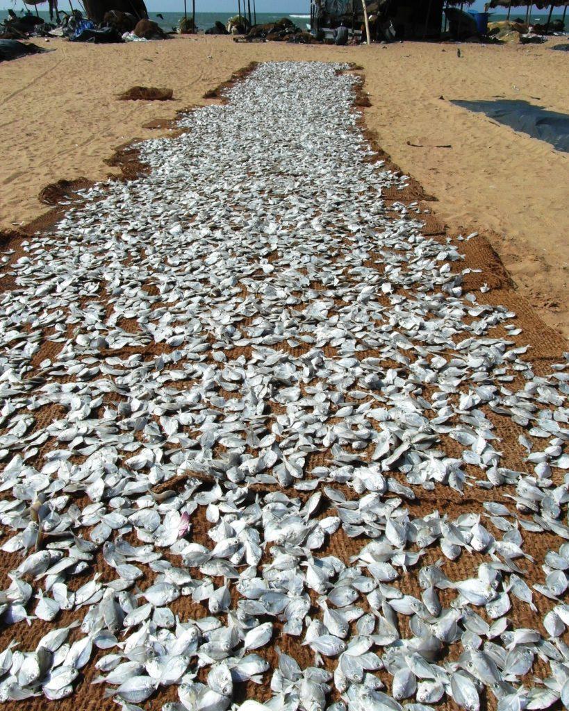 Огромные, огромные площади заняты рыбой