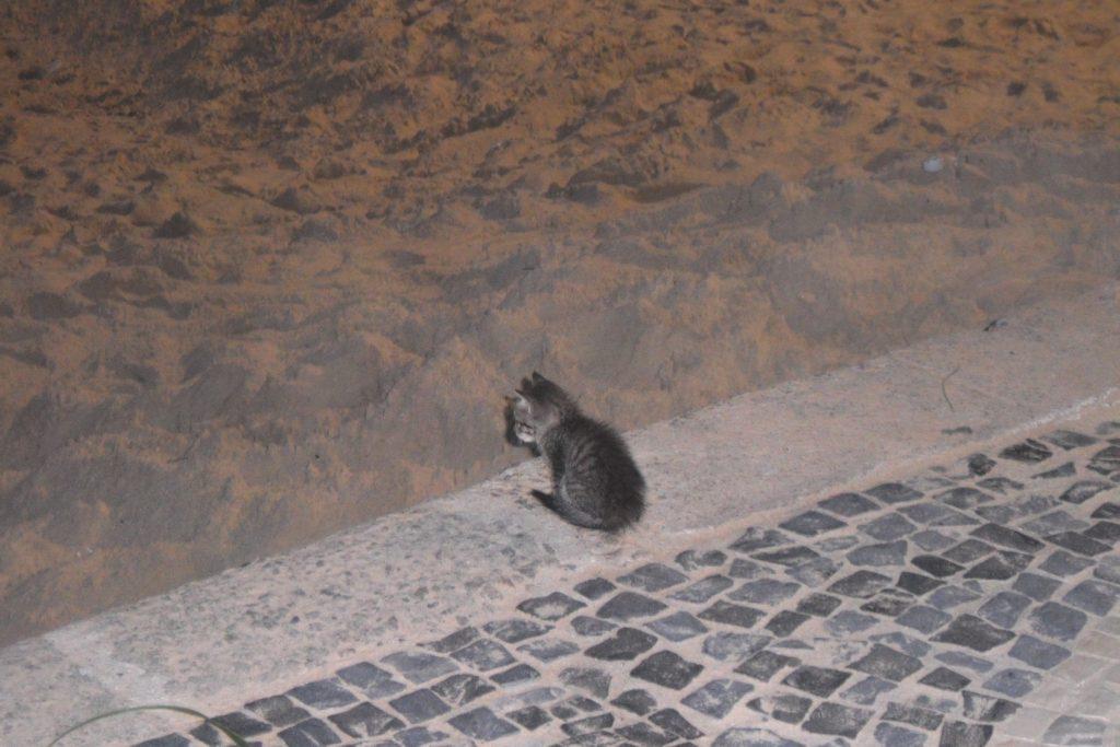 Вот такой котенок сидел на пляже. Маленький-маленький!