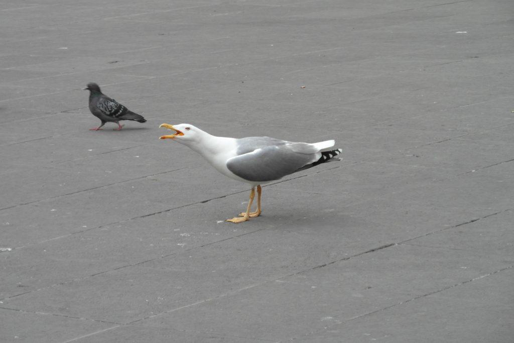Просто прекрасная птица