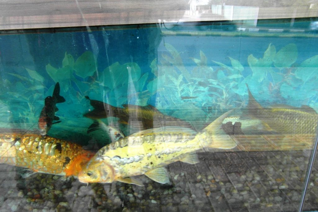 Шикарные рыбы!