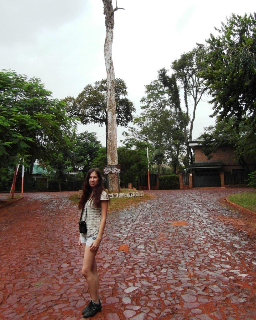 Я и гигантское дерево