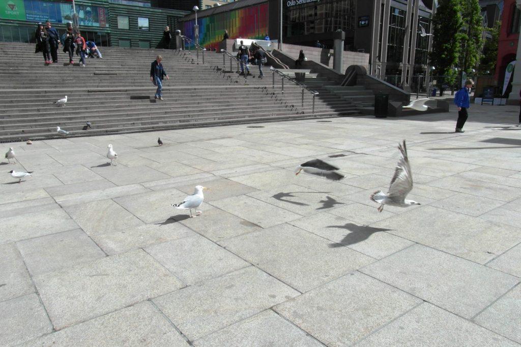 Много птичек
