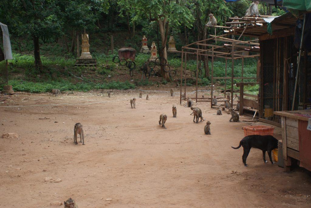 Сначала мы наблюдали за обезьянками издалека