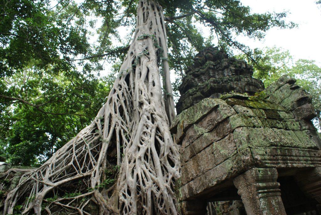 Деревья выглядят такими же древними, как и стены