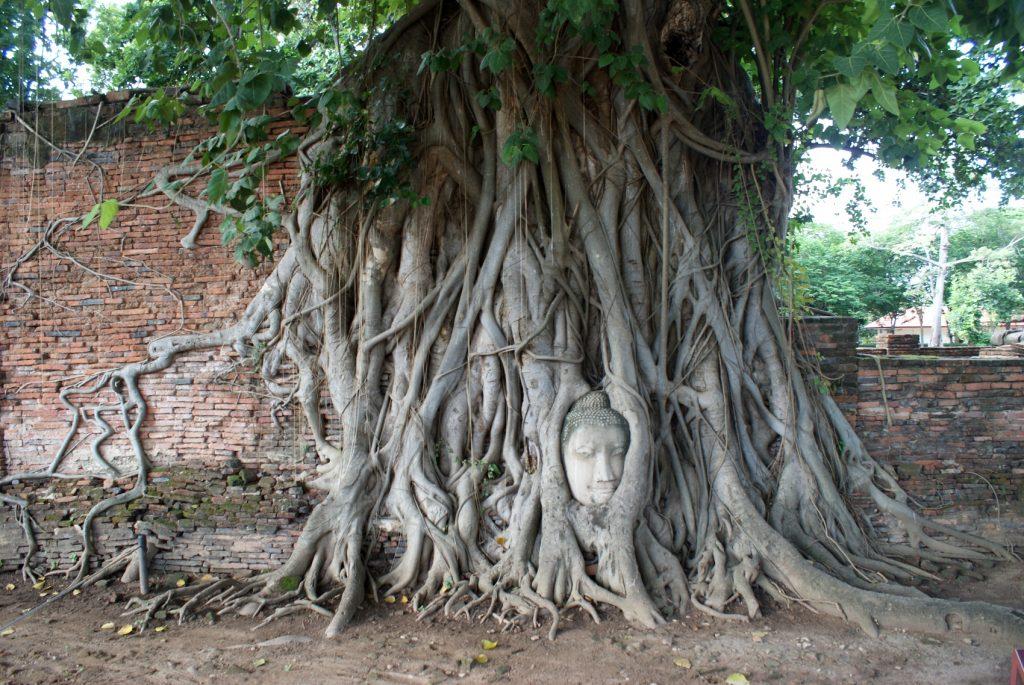 Пхра-Махатхат, считается, что голова Будды вытащена корнями дерева из-под земли, один из символов города
