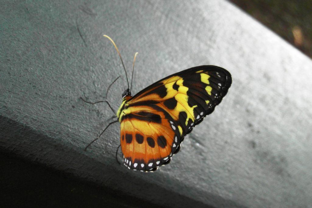 Чудесные бабочки тут